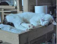 JACKYTWO né le 01/01/16. Un gentil chat qui a son petit caractère mais très sociable et qui apprécie la compagnie des humains dont il ne refusera pas une caresse Adoptable sans jeune enfant