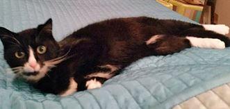 EZEKHIEL né en avril 2009, très affectueux