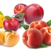 frutta_a_nocciolo.jpg
