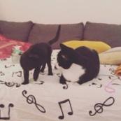 Ebène - Minnie et Mimo