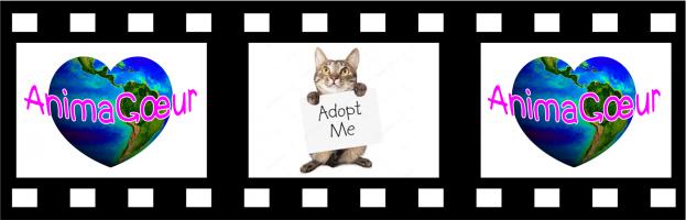 Adopt_me