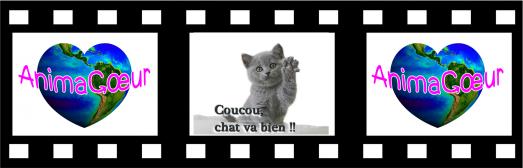 Coucou_Chat_va_bien